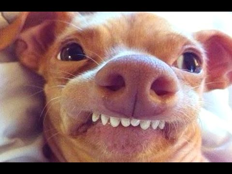 Funny Dog Videos Compilation 2015