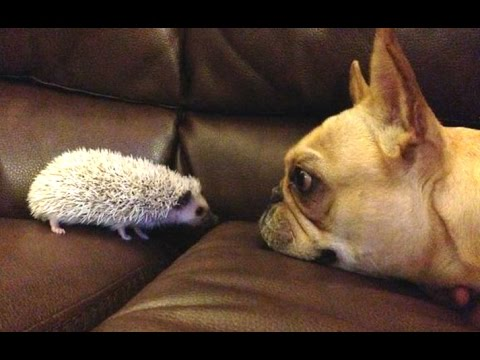 Funny Dogs Meeting Cute Baby Animals Compilation [CUTE]