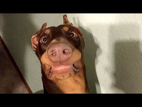 Funny dogs never fail to make you happy and smile – Funny dog compilation
