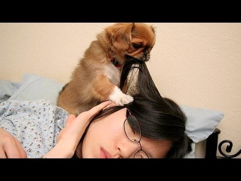 Cute dogs waking up owners – Funny dog compilation