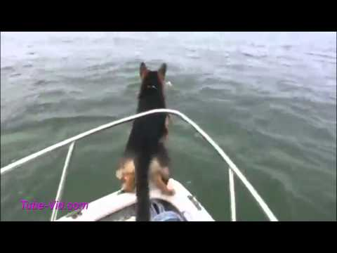 Funny Dog Videos October 2014