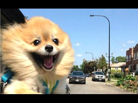 Funny Dogs – A Funny Dog Videos Compilation 2016 || NEW HD
