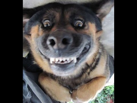 funny dog videos – try not to laugh or grin HD
