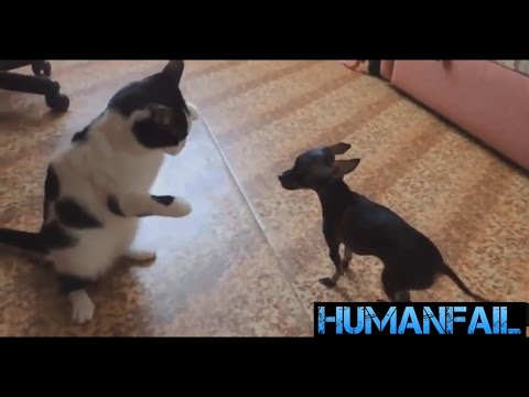 FUNNY DOG and CAT Videos Cats vs Dogs Compilation | by HumanFail