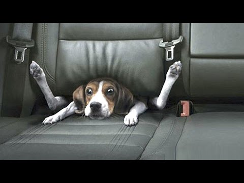 FUNNY DOG VIDEOS ★ The World's Most Funny Dog Videos (HD) [Funny Pets]