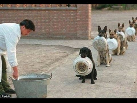 Top 5 Discipline Dogs Videos Compilation 2015