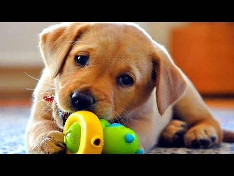 FUNNY DOG VIDEOS PART 2
