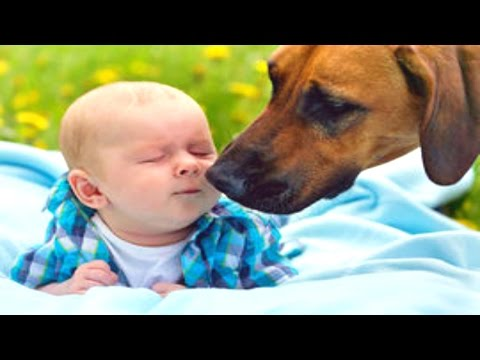 FUNNY DOG & BABY VIDEOS
