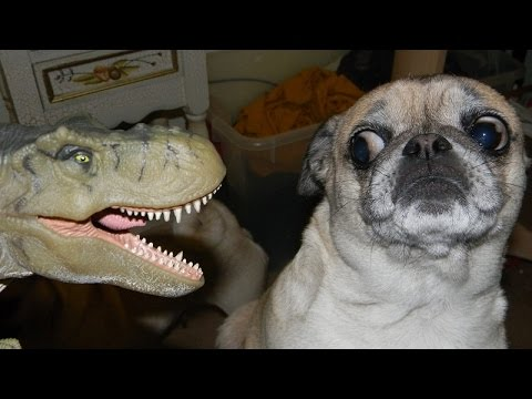 Dogs just never fail to make us laugh – Funny dog compilation