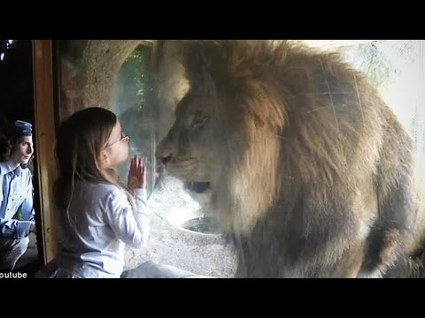 Zoo Animal Attacks ★ Animals That Don't Know What Glass Is! (HD) [Epic Laughs]