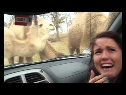 best of animals zoo and safari  compilation funny