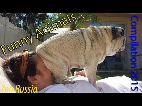 Best Funny Animal Compilation 2015 December #1 HD