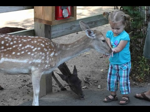 Funny – Kids and Animals at The Zoo