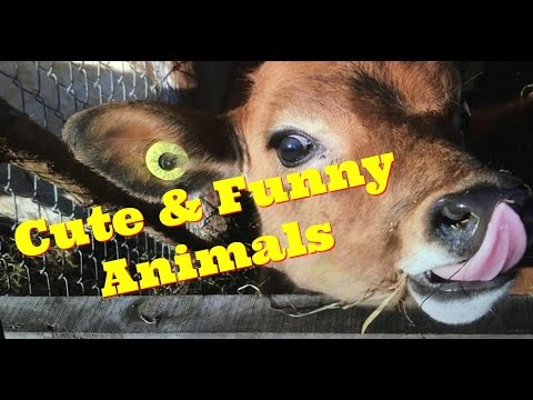 Cute and Funny Animals – Animal Video Compilation