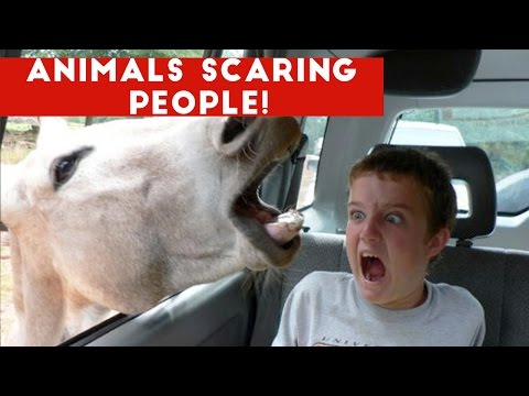 Funniest Animals Scaring People Reactions of 2016 Weekly Compilation | Funny Pet Videos