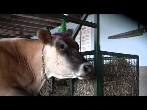 Farm Animals Wearing Funny Hats