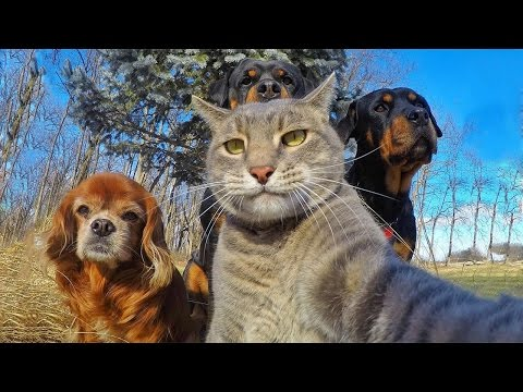 *Life Awesome* Funny Cats Compilation 2017 – LAUGHS and FUN for everyone