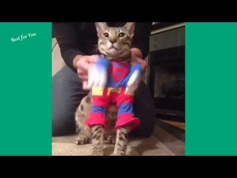 Funny Cats Vine Compilation 2016 (Part 1)