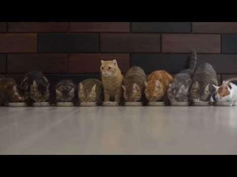 Funny Cats  Compilation March 2016