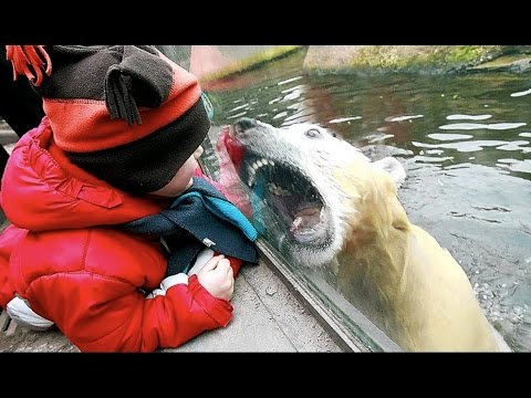 Funny Zoo Animal Surprise Attacks – Funny Animals Compilation