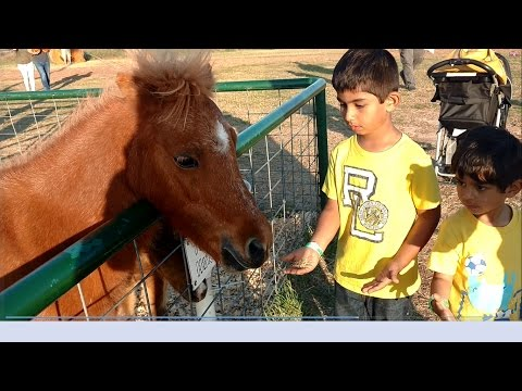 Farmland Adventures-Petting Feeding Old Mac Donald Farm Animals-Pony Ride,Kids Fun Activities
