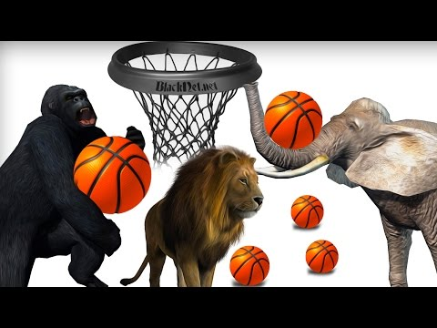 Learn Animals For Children 3D Funny & Wild Animals Playing Basket Ball Learning Games With Animals