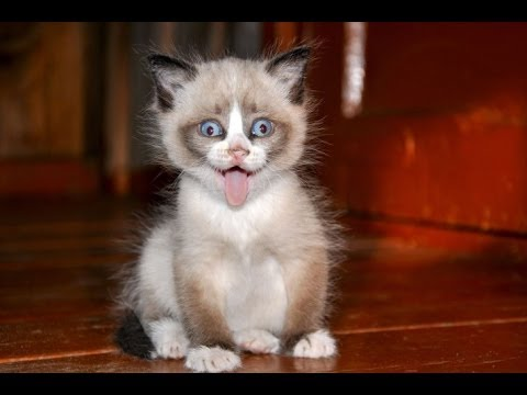 Cat Compilation – Top 2013 – Funny Moments with Cats