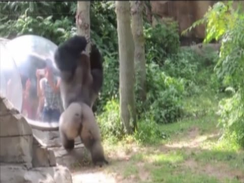 Zoo Animals Getting Angry Zoo Animals Attacks Funny Pets!