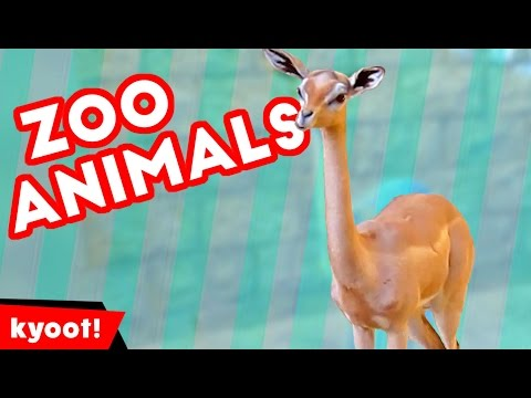 The Funniest Cutest Zoo Animal Home Video Bloopers of 2016 Weekly Compilation | Kyoot Animals