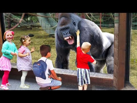 Animals Can Be Funny : Kids at the Zoo Wild animals compilation