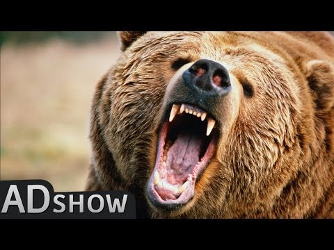 Man vs wild : funniest animals vs man fights
