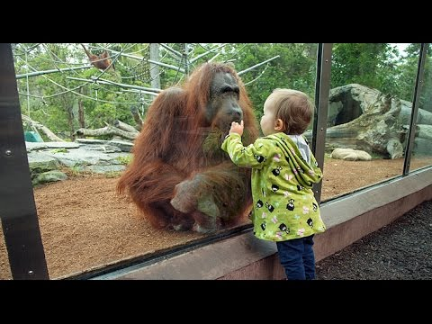 Kids At The Zoo – Best Funny Animal Compilation 2017