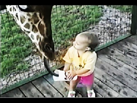 Funny Compilation at the Zoo – Kids and Animals
