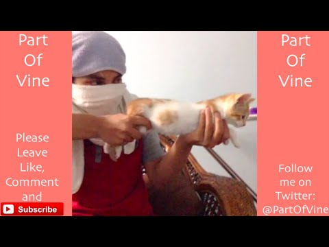 Funny Cats 2015 – Vine Compilation – BEST VINES ✔️