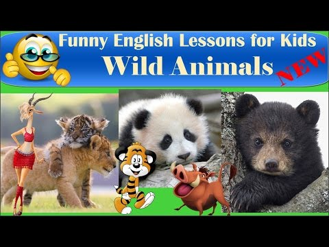 Learn Real Wild Animals for Kids | Funny animals | Comedy Cartoons Heroes