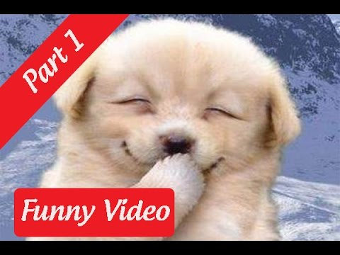 Funny Videos : Funny Dog And Cat Videos Try Not To Laugh [Part 1]