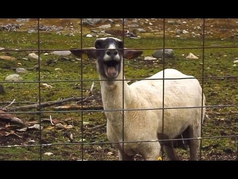 Animals Behaving Like Humans Compilation