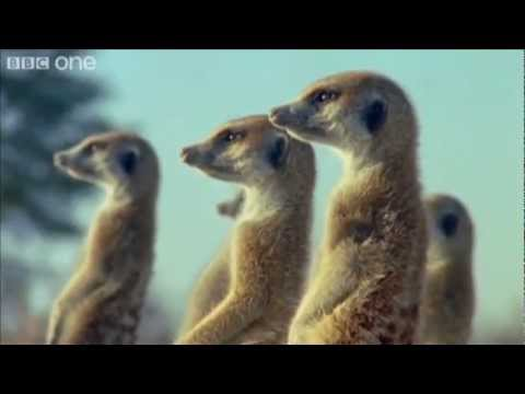 Funny Talking Animals – Walk On The Wild Side ( BBC-One).  HD
