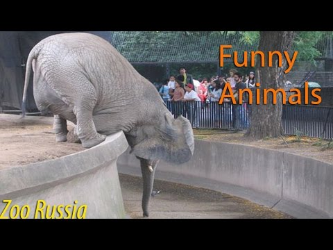 Best Funny Animal Compilation 2016 March #1 HD
