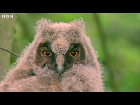 Funny Talking Animals (Walk on the Wild Side) HD – Children in Need Special 2009 – BBC