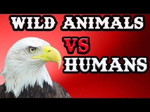 Wild Animals Vs Humans – Breaking Videos