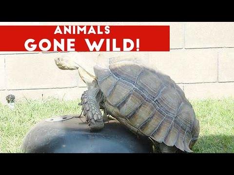 Funniest Animals Gone Wild Video Compilation December 2016 | Funny Pet Videos