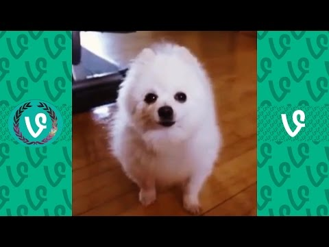 Gabe The Dog Vines Compilation | Dank Memes Compilation 2017