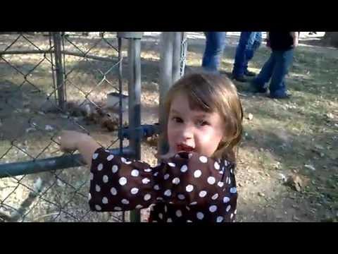 Kids Funny Farm Animal Videos