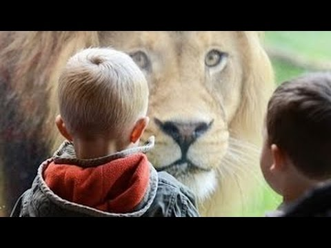 Animals Try To Attack Kids at the zoo – Funny Animals and Kids Videos