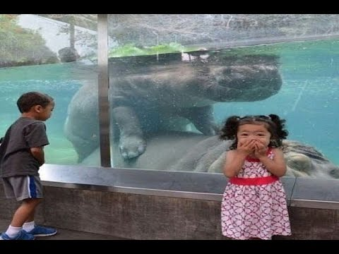 Funny Pet and animal Videos compilation 2014 || funny animals #1