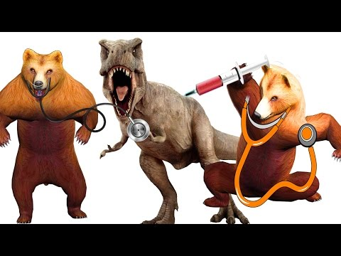Funny Wild Animals Fight Video Doctor Bear Giving Injection To Dinosaur Funny Animals Fight For Kids