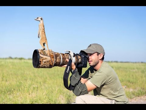 Funny pictures of funny wild animals disturbing photographers, Very funny and cute 2016