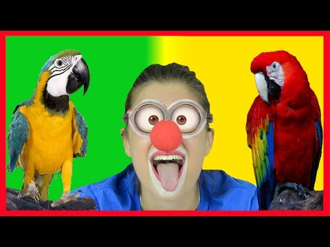 Wild Animals Names and Sounds for kids | Funny Clown Parrots Macaw Cockatoo Africa Zoo animals #9