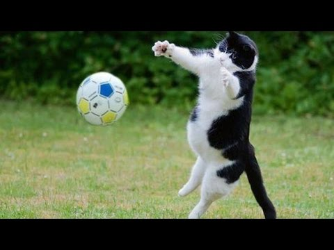 TRY NOT TO LAUGH OR GRIN – Funny Cat Fails Compilation 2016